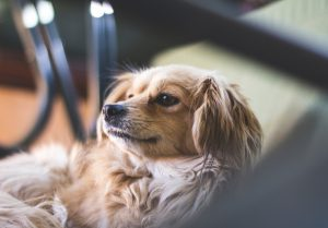 Ways To Market Your Pet Sitting Business