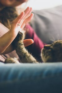 How To Market A Pet Sitting Business