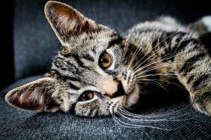 Pet Sitting As A Second Job